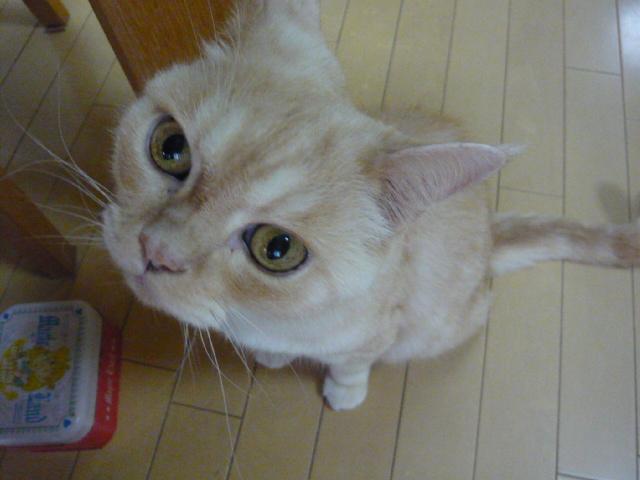 ちゃぶ台の前で待つ猫_d0044239_19262295.jpg