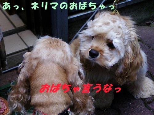 b0067012_18272489.jpg