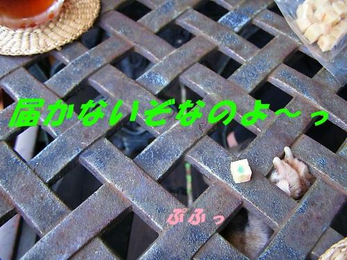 b0067012_1881955.jpg