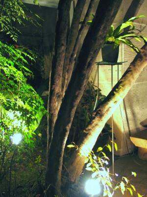 """ちいさな庭の小さな自然""""鈴なりのエゴの実""""_e0010418_15435696.jpg"""