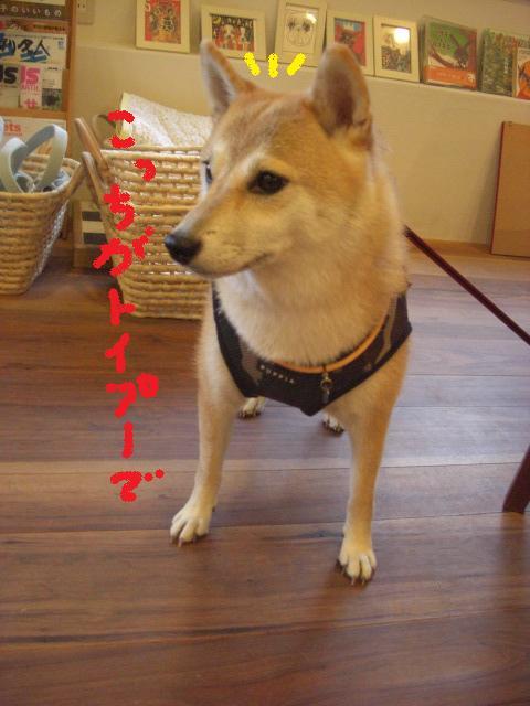 b0137064_20112211.jpg