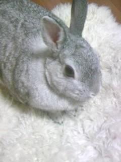 ウサギ専門の獣医さん_d0096268_17273543.jpg