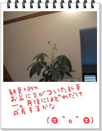 f0175279_21571044.jpg