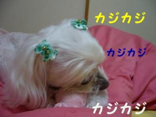 f0145192_16542726.jpg