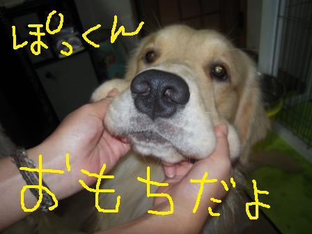 f0176830_16382792.jpg