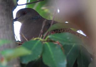 青い鳥_c0085543_1456395.jpg
