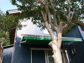 ブルージーンズハウスその後_d0087595_11433175.jpg