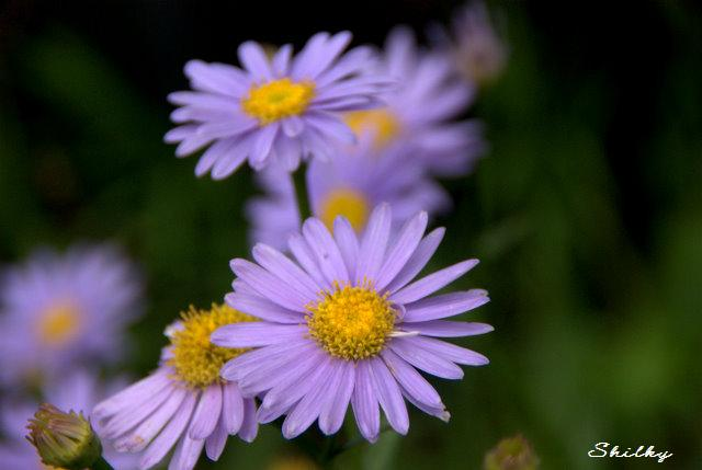 静かな紫のまなざし_f0147895_015521.jpg