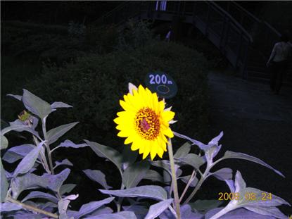e0012724_15503440.jpg