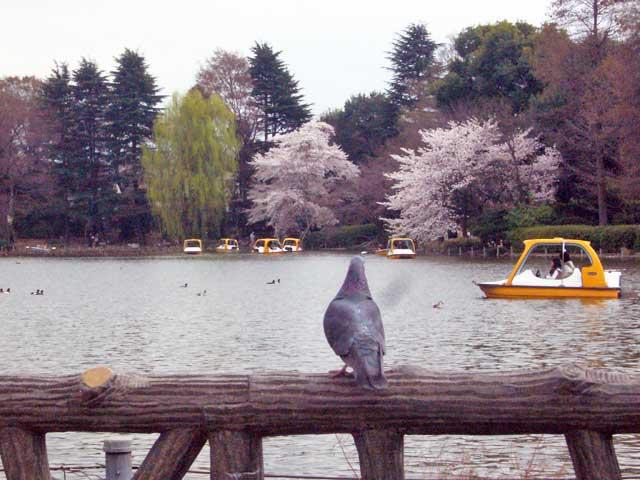 2008年 善福寺公園で花見_a0016730_4564847.jpg