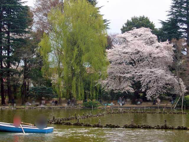 2008年 善福寺公園で花見_a0016730_4571757.jpg