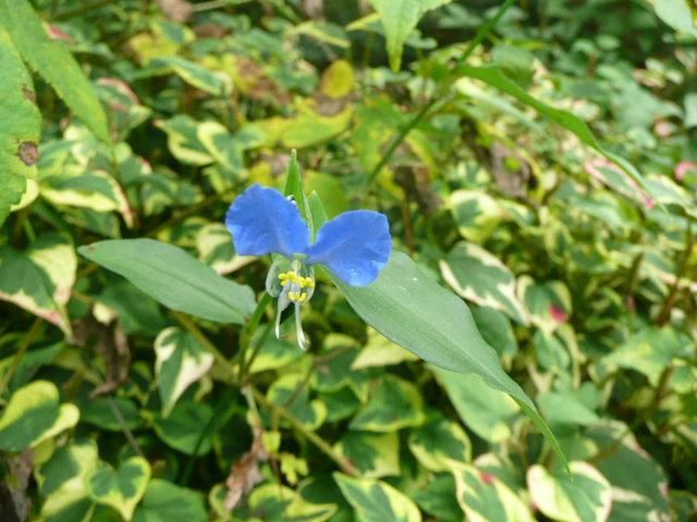 池の周りに咲いている野の花たち♪_f0099147_22104432.jpg