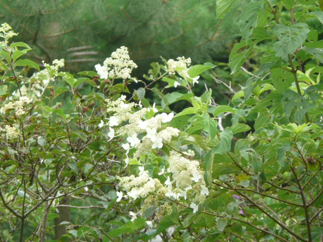 池の周りに咲いている野の花たち♪_f0099147_22125914.jpg