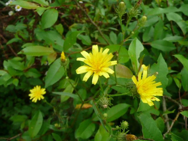 池の周りに咲いている野の花たち♪_f0099147_22142133.jpg