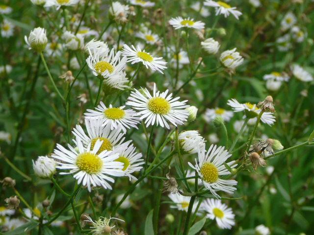 池の周りに咲いている野の花たち♪_f0099147_2214684.jpg