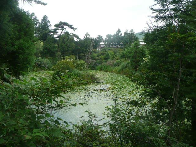 池の周りに咲いている野の花たち♪_f0099147_22164178.jpg