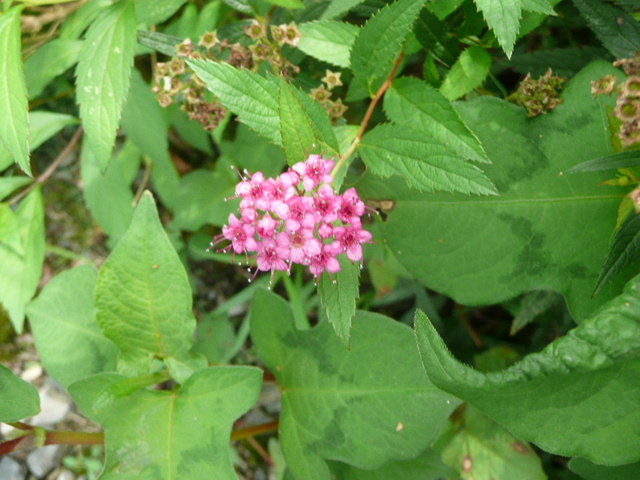 池の周りに咲いている野の花たち♪_f0099147_2293371.jpg
