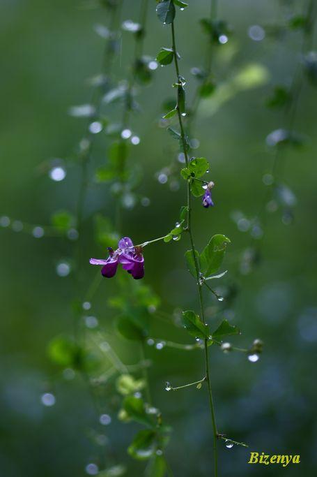 雨の中の萩_d0086248_7304122.jpg