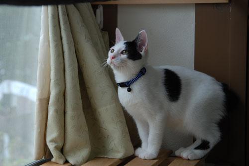 猫の首に鈴を付けるのはダメ?_d0084952_2230322.jpg