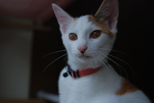 猫の首に鈴を付けるのはダメ?_d0084952_2230381.jpg