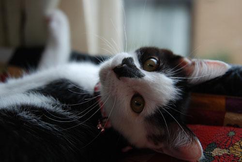 猫の首に鈴を付けるのはダメ?_d0084952_2230473.jpg