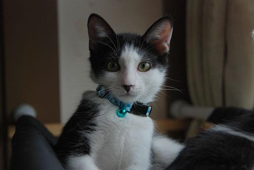 猫の首に鈴を付けるのはダメ?_d0084952_22311947.jpg