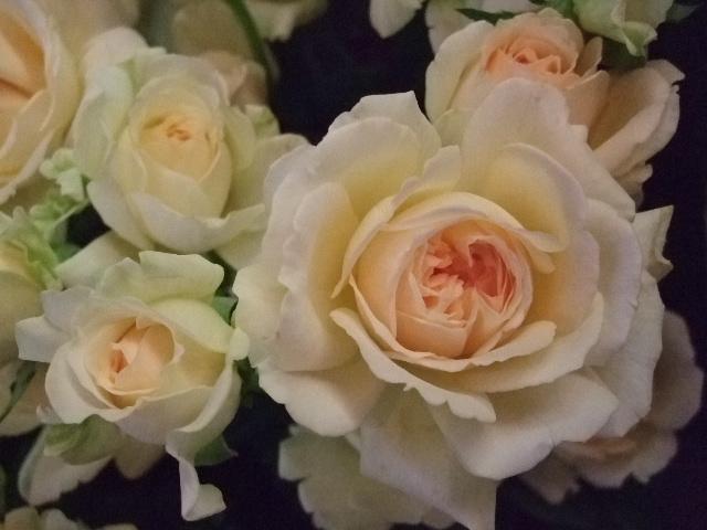 オークリーフ(秋の草花)_f0049672_1395858.jpg