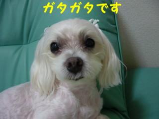 f0145192_16184732.jpg