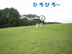 e0131506_2011436.jpg
