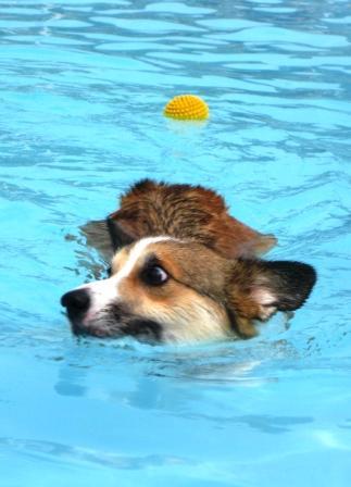 泳ぐの大好き~♪_f0155118_64633100.jpg