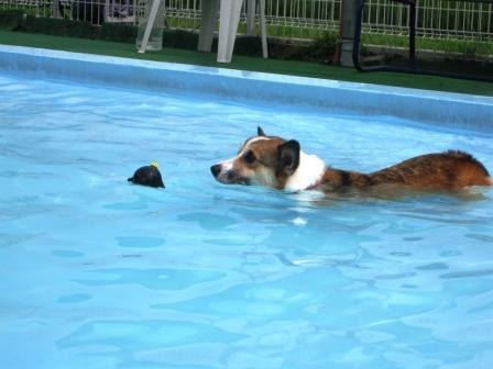 泳ぐの大好き~♪_f0155118_6482046.jpg