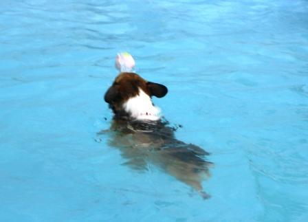 泳ぐの大好き~♪_f0155118_6575071.jpg