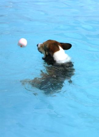 泳ぐの大好き~♪_f0155118_70113.jpg