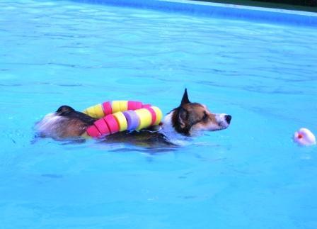 泳ぐの大好き~♪_f0155118_7101178.jpg