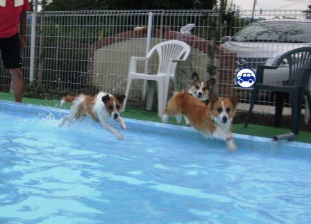泳ぐの大好き~♪_f0155118_7193945.jpg