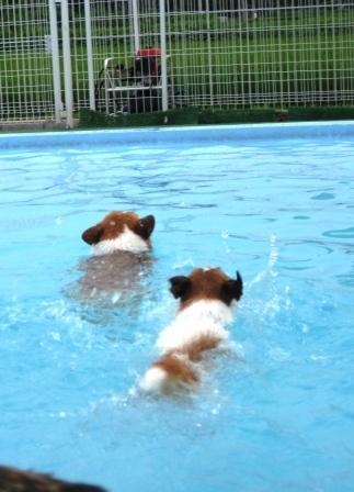 泳ぐの大好き~♪_f0155118_7231490.jpg
