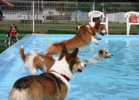 泳ぐの大好き~♪_f0155118_7255685.jpg