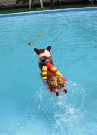 泳ぐの大好き~♪_f0155118_7274055.jpg