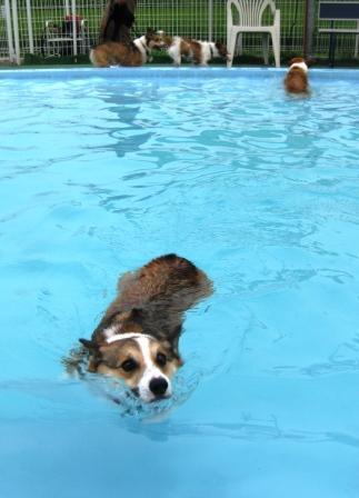 泳ぐの大好き~♪_f0155118_7312122.jpg