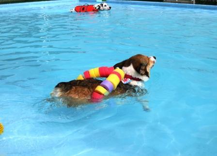 泳ぐの大好き~♪_f0155118_78280.jpg
