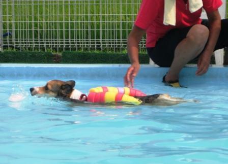 泳ぐの大好き~♪_f0155118_785467.jpg