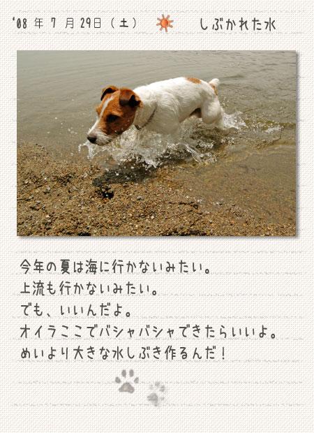 b0040323_130559.jpg