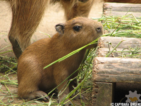 08年08月15日こども動物自然公園、夕方_f0138828_1003349.jpg