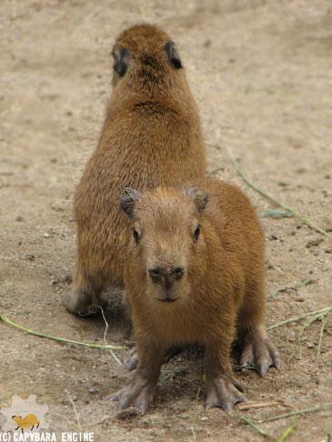 08年08月15日こども動物自然公園、夕方_f0138828_1065379.jpg