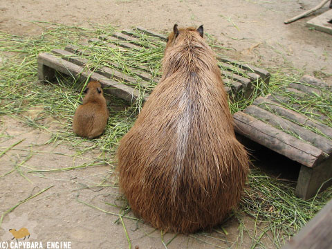 08年08月15日こども動物自然公園、夕方_f0138828_1082674.jpg