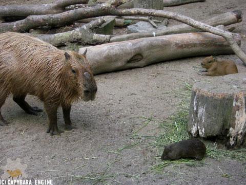 08年08月15日こども動物自然公園、夕方_f0138828_1091620.jpg
