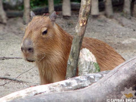 08年08月15日こども動物自然公園、夕方_f0138828_9425340.jpg