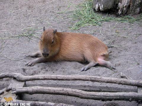 08年08月15日こども動物自然公園、夕方_f0138828_956228.jpg