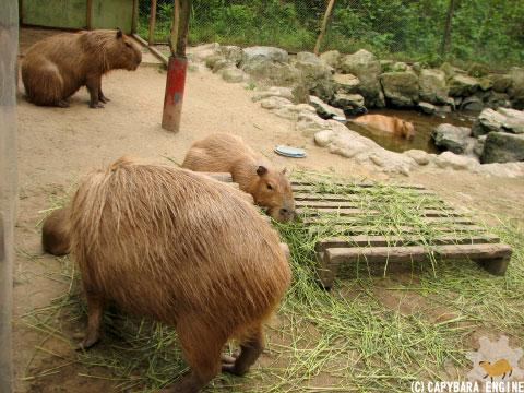 08年08月15日こども動物自然公園、夕方_f0138828_9585614.jpg