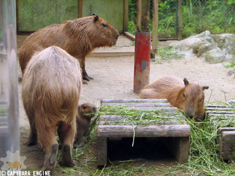 08年08月15日こども動物自然公園、夕方_f0138828_9591466.jpg